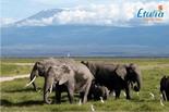 Sejur exotic Kenya