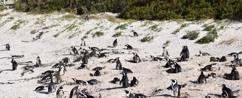 Atractii Boulders Beach Africa de Sud - vezi vacantele