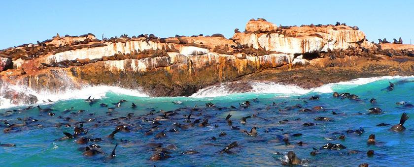 Atractii Insula Seal Africa de Sud - vezi vacantele