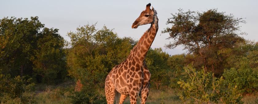 Atractii Parcul National Kruger Africa de Sud - vezi vacantele