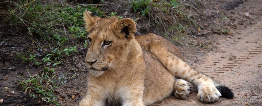 Atractii Pilanesberg Africa de Sud - vezi vacantele