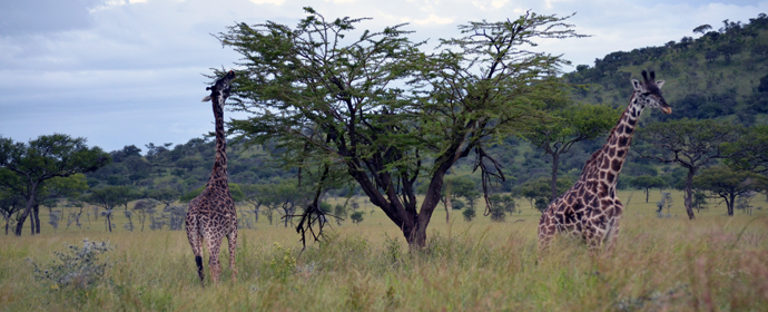 Discover Africa de Sud & Zambia