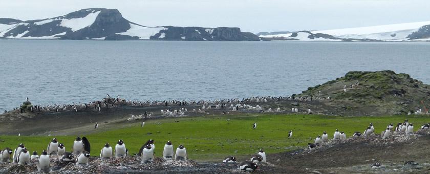 Atractii Insula Aitcho Antarctica - vezi vacantele