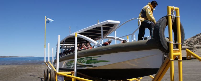 Atractii In cautarea balenelor Argentina - vezi vacantele