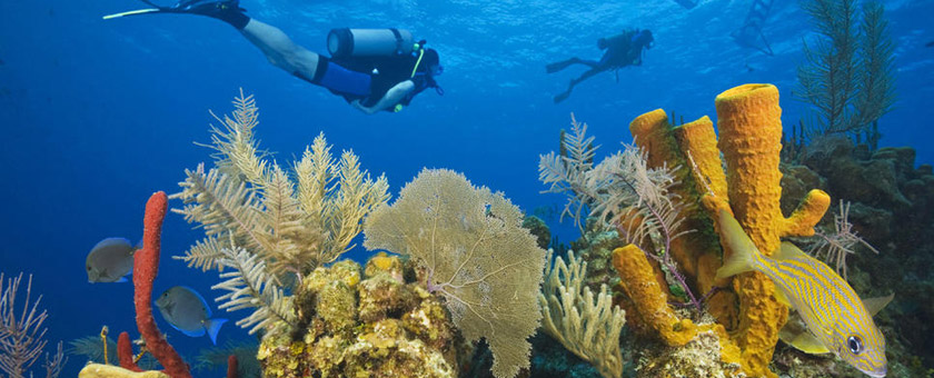 Atractii Reciful Belize Belize - vezi vacantele