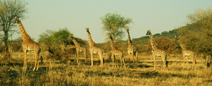 Best of Africa de Sud, Botswana, Namibia & Zimbabwe