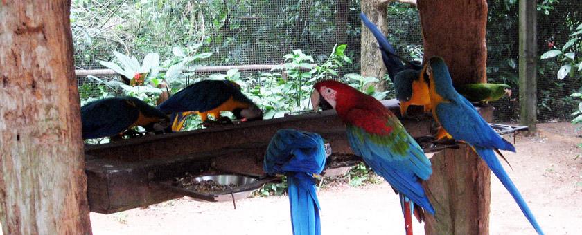 Atractii Bird Park Iguassu Brazilia - vezi vacantele