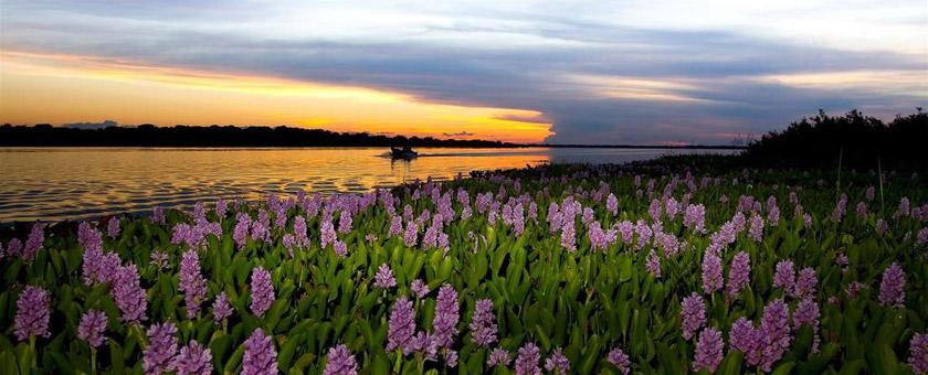 Atractii Pantanal Brazilia - vezi vacantele