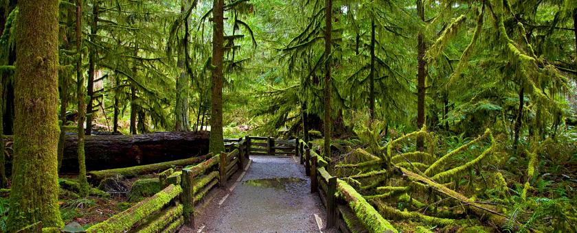 Atractii Parcul Provincial MacMillan Canada - vezi vacantele