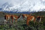 Best of Patagonia