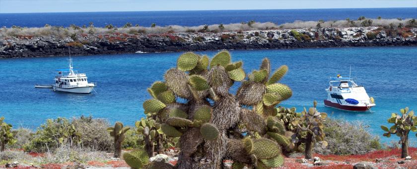 Galapagos, Insula Pinta, Ecuador Poza realizata de Sorin Stoica, noiembrie 2009