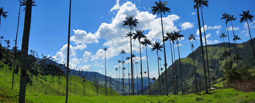 Atractii Cocora Columbia - vezi vacantele