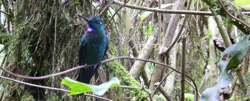 Atractii Gradinile La Paz Costa Rica - vezi vacantele