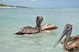 Sejur Cuba: plaja Varadero 10 zile - 20 septembrie 2015 Caraibe Oferte Caraibe - Agentia de Turism Eturia