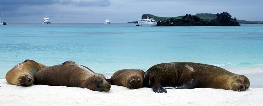 Galapagos: Lei de mare pe Insula Espanola, Ecuador Poza realizata de Daniela Shah, februarie 2008