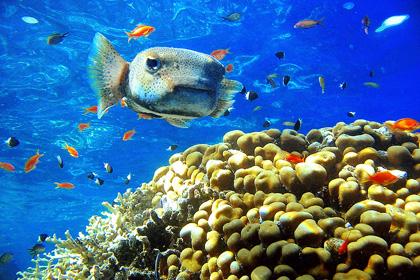 Paste 2021 - Sejur Charter Sharm El Sheikh, Egipt, 8 zile