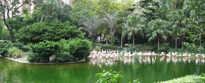 Atractii Hong Kong Hong Kong - vezi vacantele