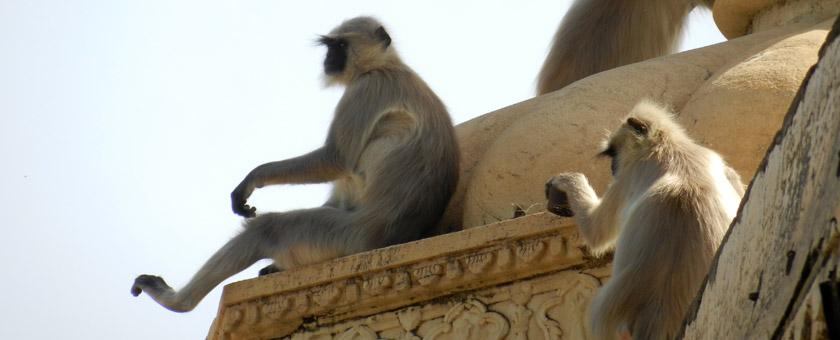 Atractii Udaipur India - vezi vacantele