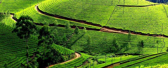 Kerala - taramul zeilor