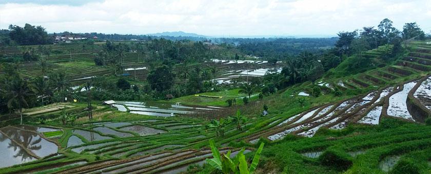 Terase de orez in Ubud, Insula Bali, Indonezia Poza realizata de Corina Cif, august 2016