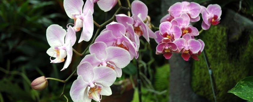Atractii Gradina Botanica Bogor Indonezia - vezi vacantele