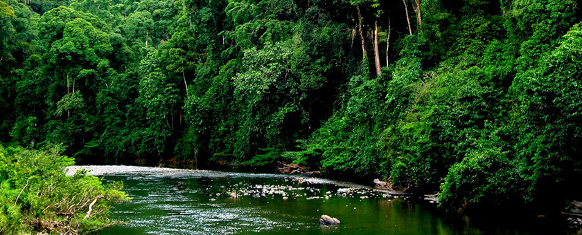 Atractii Insula Borneo Indonezia - vezi vacantele