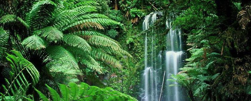 Atractii Padurea tropicala din Sumatra Indonezia - vezi vacantele