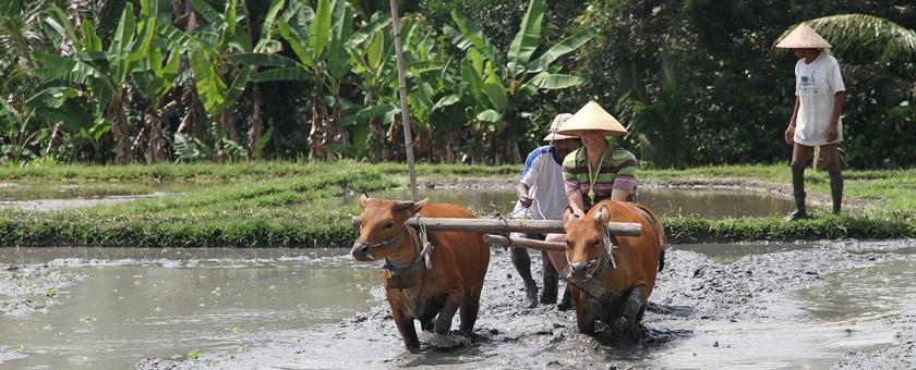 Atractii Taman Sari Buwana Indonezia - vezi vacantele