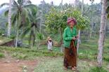 Discover Indonezia
