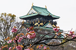 Art & Culture Japan
