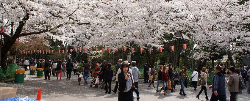 Oferte de vacanta Japonia