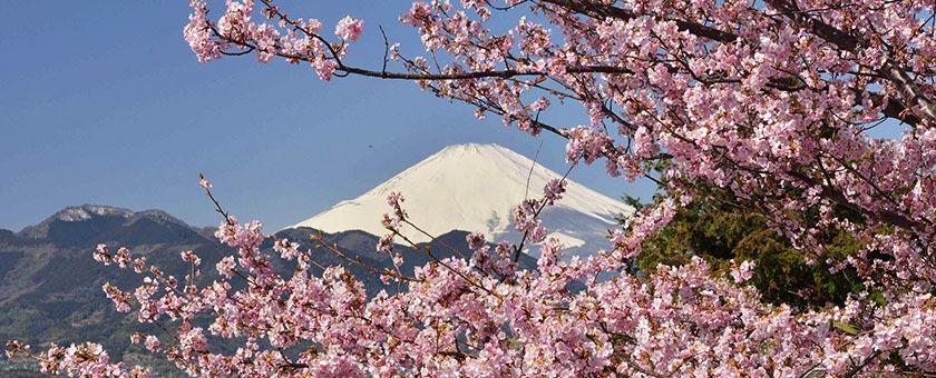 Sakura - Sarbatoarea ciresilor infloriti Japonia, 11 zile - martie 2017 - cu Razvan Pascu