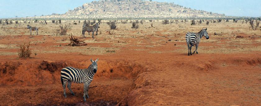 Atractii Maasai Mara Kenya - vezi vacantele