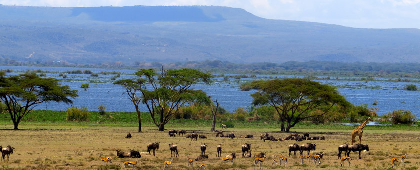 Safari Marea Migratie Kenya - iulie 2021