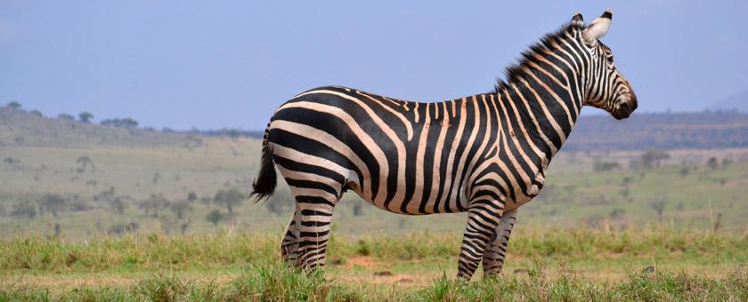 Atractii Samburu Kenya - vezi vacantele