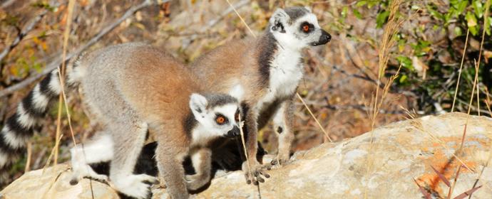 Best of Namibia & Madagascar