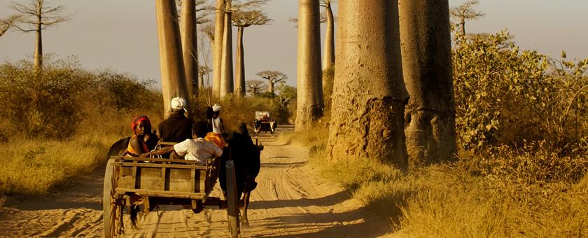 Atractii Morondava Madagascar - vezi vacantele
