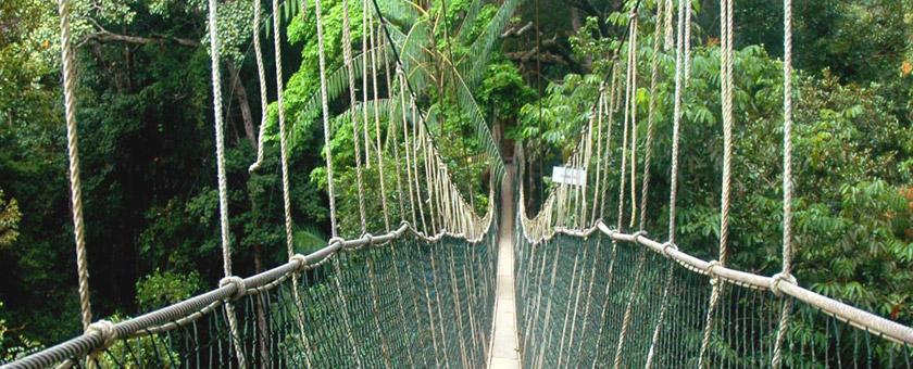 Atractii Taman Negara Malaezia - vezi vacantele