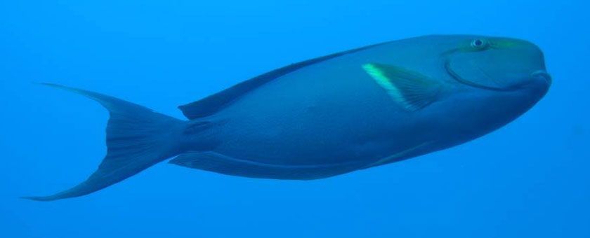 Atractii Diving Maldive - vezi vacantele