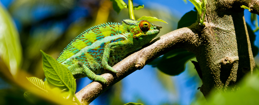 Discover Madagascar & Mauritius, 13 zile - august 2019