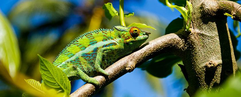 Explore Madagascar & Mauritius, 16 zile - august 2018