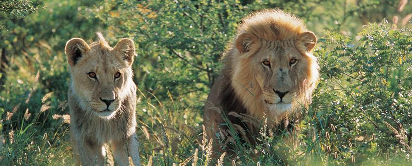 Atractii Parcul National Mamili Namibia - vezi vacantele