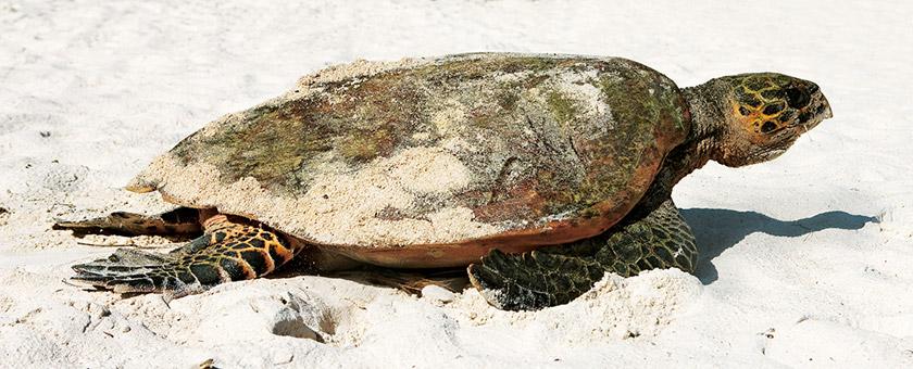 Luna de miere - Sejur plaja Seychelles, 9 zile - august 2018
