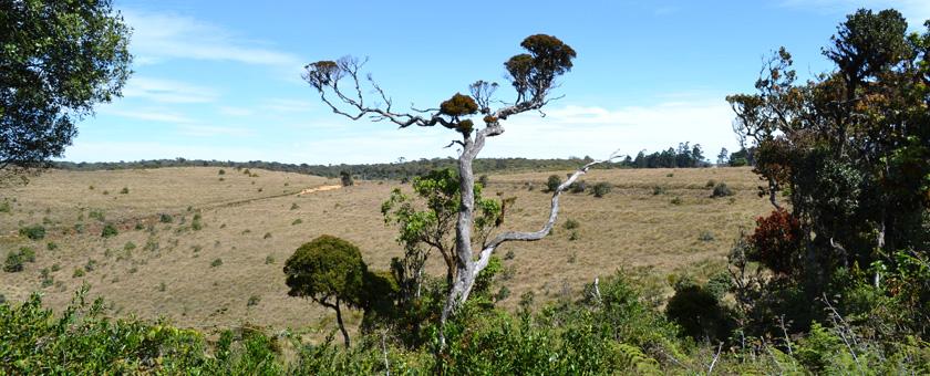 Atractii Parcul Horton Plains Sri Lanka - vezi vacantele