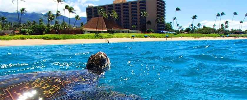 Maui Touch