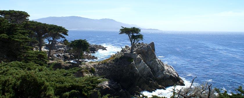 Atractii Lone Cypress Statele Unite ale Americii - vezi vacantele