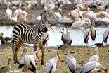 Tanzania Southern Parks & Zanzibar