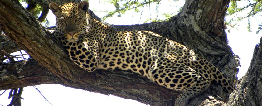 Explore Kenya, Tanzania & Zanzibar, 14 zile - August 2016
