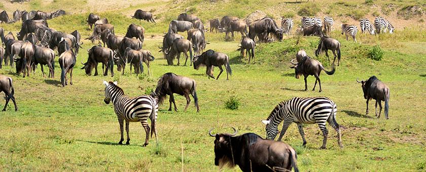 Explore Kenya & Tanzania