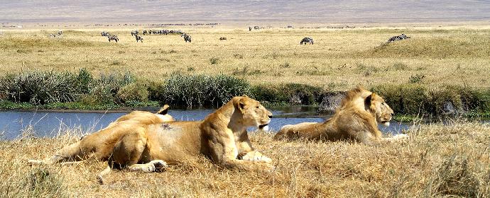 Explore Africa de Sud, Tanzania & Zanzibar